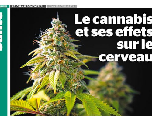 Le cannabis et ses effets sur le cerveau