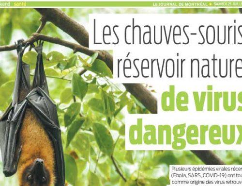 Les chauves-souris, réservoir naturel de virus dangereux