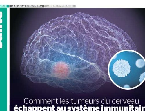 Comment les tumeurs du cerveau échappent au système immunitaire