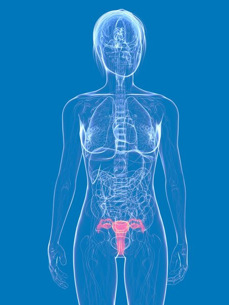 Treatment research - Gynecological cancers, ovarian cancer, uterus cancer