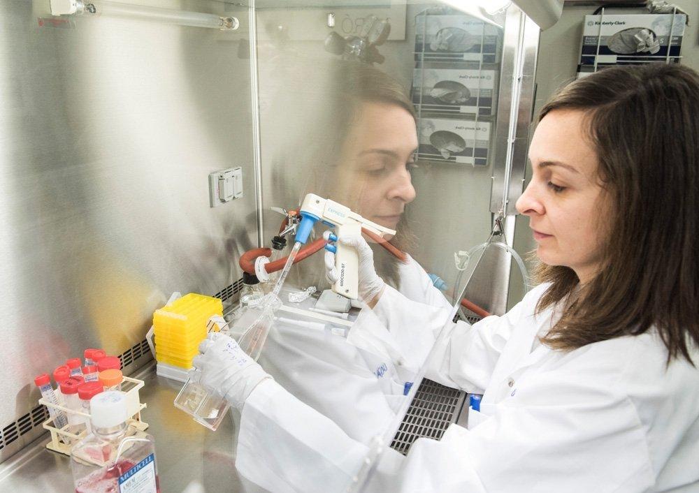 Cyndia Charfi, chercheuse post-doctorale à la Chaire, cultive des cellules souches pré-adipocytaires.